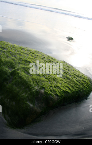 moss covered rock on a beach. - Stock Photo