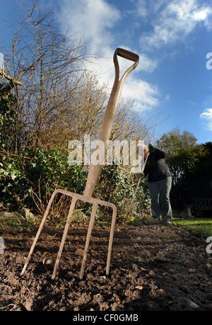 Unusual Allotment Vegetables Garden Plants Growing Stock Photo Royalty  With Interesting  Gardener Working In Winter Garden With Garden Fork With Blue Sky Re  Gardening Growing Plants Veg With Astounding Secret Garden  Dolphin Habitat Also Thomson Reuters Hatton Garden In Addition Garden Centres In Cardiff And Roof Garden High Street Kensington As Well As Sevilla Garden Additionally Garden Buildings Direct Review From Alamycom With   Interesting Allotment Vegetables Garden Plants Growing Stock Photo Royalty  With Astounding  Gardener Working In Winter Garden With Garden Fork With Blue Sky Re  Gardening Growing Plants Veg And Unusual Secret Garden  Dolphin Habitat Also Thomson Reuters Hatton Garden In Addition Garden Centres In Cardiff From Alamycom