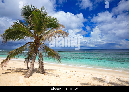 Bel Ombre beach on Mahe Island, Seychelles, with a palm tree and Indian Ocean - Stock Photo