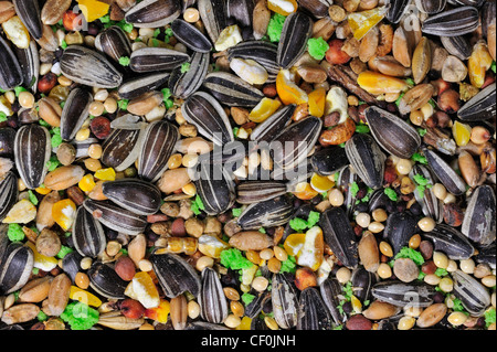 Mixture with grains, corn and sunflower seeds as bird feed for birds at birdfeeder in winter - Stock Photo
