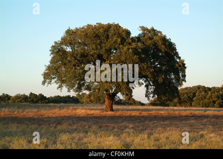 Portugal, Alentejo, tree on the top of the hill - Stock Photo