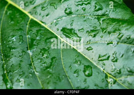 Closeup of a leaf with rain drops on it abstract nature background - Stock Photo
