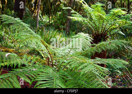 some beautiful ferns in the rain forest - Stock Photo