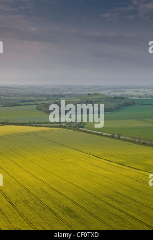 Looking across the Vale of Pewsey in Wiltshire from Knapp Hill. A sea of yellow rapeseed is present in the fields - Stock Photo