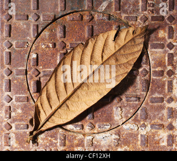 Brittle Autumn Leaf Laying On Water Meter Cover; Spain - Stock Photo