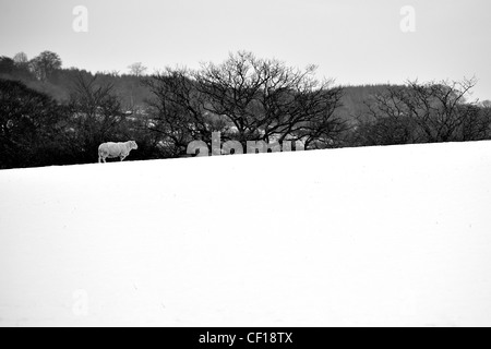 Lonely sheep in a field covered in very white snow in the middle of winter with bare barren trees in the background - Stock Photo
