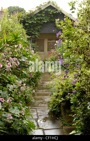 Modern Victorian Garden Detail view of a paved garden path, leading to the shed Vitis coignetiae climbing on the - Stock Photo