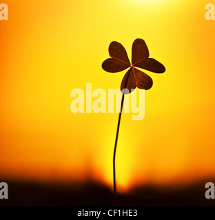 Clover at sunset, silhouette of shamrock plant over warm yellow sky background, abstract floral image, spring nature - Stock Photo