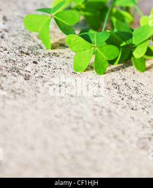 Fresh clover leaves over stone, green spring floral border, lucky shamrock, St.Patrick's day holiday symbol, abstract - Stock Photo