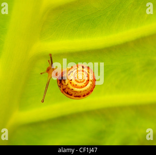 Abstract green nature background with tiny snail - Stock Photo