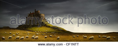 Sheep grazing by Lindisfarne Castle, a 16th-century castle located on Holy Island. - Stock Photo