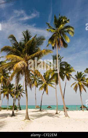 Coconut palms at the beach of Paje, Zanzibar, Tanzania - Stock Photo