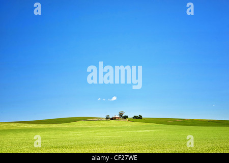 fields of wheat in the countryside at burra south australia - Stock Photo