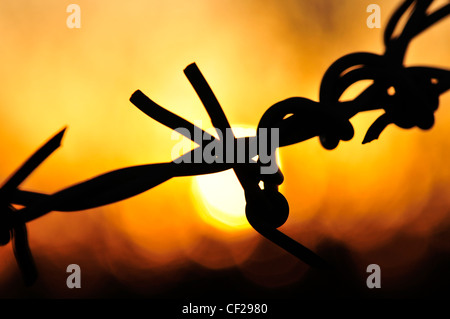 Barbed wire at sunset in Sahuarita, Arizona, USA. - Stock Photo