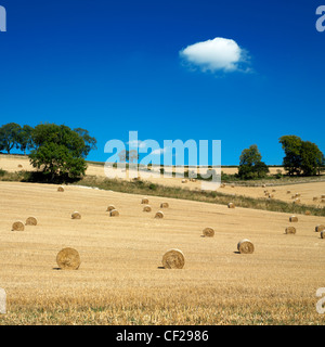 Hayfield with hay bales. The bales are formed using mechanical harvesting techniques. - Stock Photo