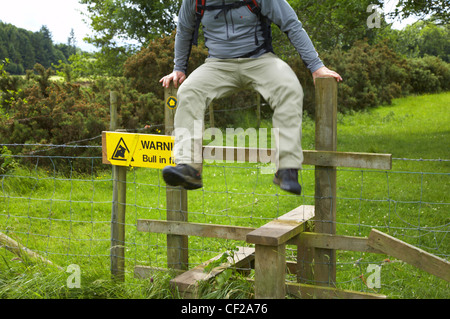 The Cumbria Way. A hiker gets away from a bull by jumping over a stile on the last day of the Cumbria Way track - Stock Photo