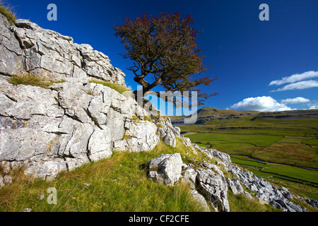 View of Ingleborough, the second highest mountain in the Yorkshire Dales and one of the Yorkshire Three Peaks, from - Stock Photo