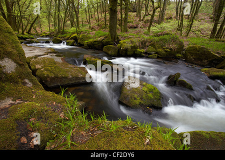 River Fowey flowing through woodland in the Golitha National Nature Reserve. - Stock Photo