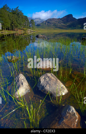 View across Blea Tarn looking towards the Langdale Pikes. - Stock Photo