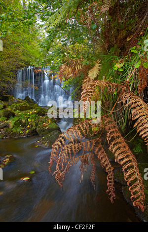 Hebden Beck flowing over Scala Force in autumn. - Stock Photo