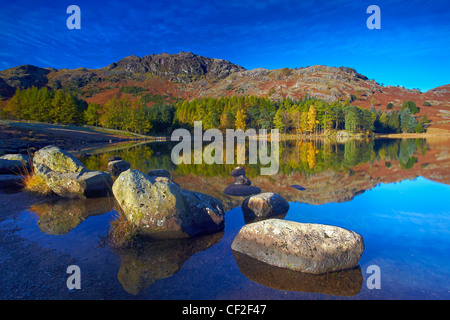 Forestry and hillside reflected in the still water of Blea Tarn in autumn. - Stock Photo