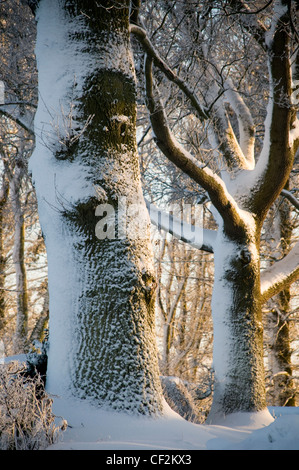 Woodland in the Scottish Borders covered in snow.