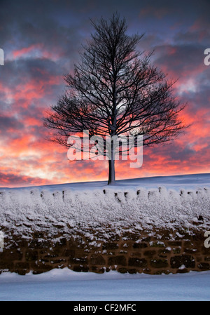 A lone, snow covered tree at sunset. - Stock Photo