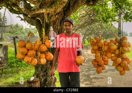 A vendor selling king coconuts on the road, Sri Lanka - Stock Photo