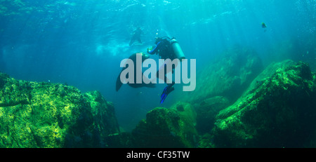Scuba Divers With Sea Lions Underwater At Los Islotes National Marine Park Espiritu Santo Island; La Paz Baja California - Stock Photo