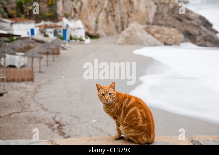 A Cat Sits On A Stone Ledge On The Beach; Nerja Malaga Andalusia Spain - Stock Photo