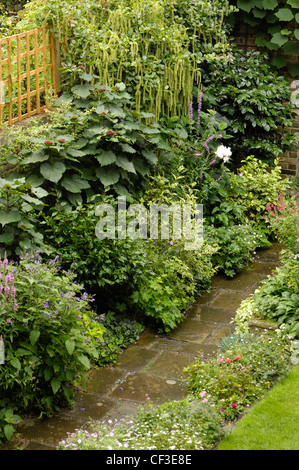Modern Victorian Garden Detail view of paved garden path and border planted Itea Ilicifolia and Clematis (Donation) - Stock Photo