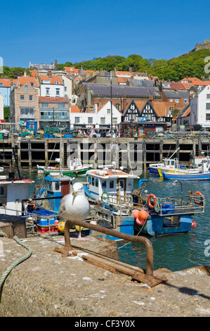 A seagull standing on the harbour wall in Scarborough Harbour. - Stock Photo