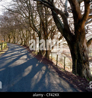 Sunlight filters through bare trees onto a country road in the Lake District. - Stock Photo