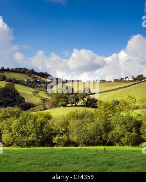 View across a lush green valley towards the Dorset village of Birdsmoorgate. - Stock Photo