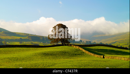 Traditional drystone walls in Wensleydale in the Yorkshire Dales. - Stock Photo