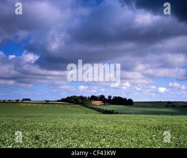 Arable farmland near King's Lynn. - Stock Photo