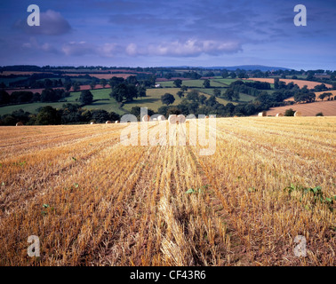 Looking across a harvested hay field in Shropshire towards rolling hills. - Stock Photo