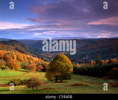 View of the Gwydir Forest in Snowdonia during the peak of autumn. - Stock Photo