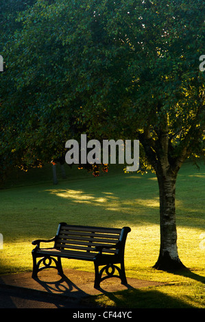 Dawn sunlight backlighting a park bench on Plymouth Hoe in Summer. - Stock Photo