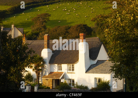Small Thatched Cottage Below Farmland In The North Devon