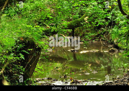 A view of Bracketts Coppice nature reserve Dorset UK - Stock Photo