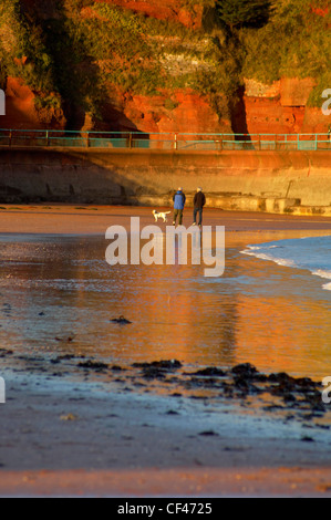 Dog walkers at sunset on Goodrington beach in Devon. - Stock Photo
