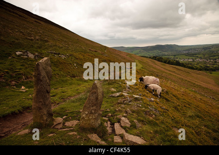 Two sheep grazing by the side of a footpath running across a hill in the Peak District National Park. - Stock Photo