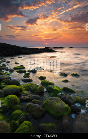Sunset over green seaweed covered rocks at Penmon point on the Isle of Anglesey. - Stock Photo