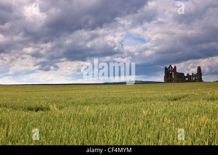 The ruins of Whitby Abbey viewed across a field on the headland above Whitby. - Stock Photo