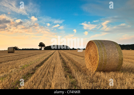 Bales of hay in a field in Norfolk on a summers evening. - Stock Photo