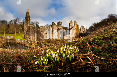 Fountains Abbey, a ruined Cistercian monastery, founded in 1132. It is a UNESCO World Heritage Site  and part of - Stock Photo