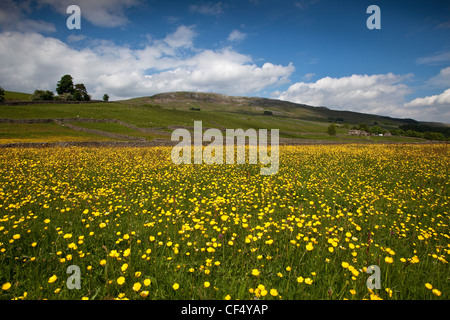 Wild Flower Meadow above Askrigg village, Wensleydale in the Yorkshire Dales. Ellerton Scar is in background. - Stock Photo