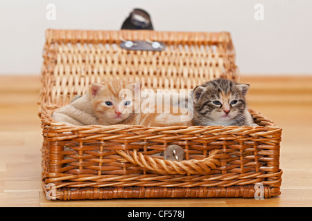 Germany, Kittens in box, close up - Stock Photo