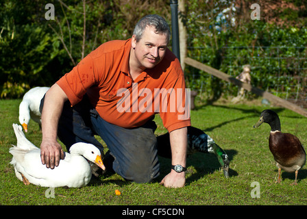 Farmer/small-holder petting his happy free range pet birds poultry Ducks & geese on a welsh smallholding in the - Stock Photo
